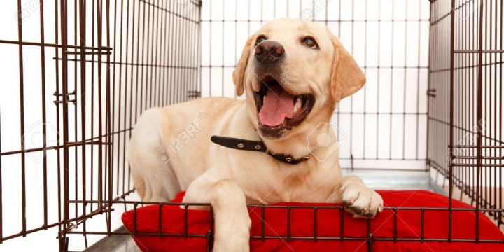 Teach your dog to LOVE his crate!