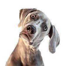 How do I train my dog to….