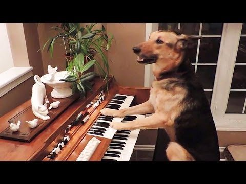 Have you played piano for 4,000 people recently??